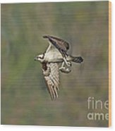 Osprey Carrying Small Fish Wood Print