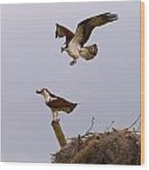 Osprey Coming In Wood Print