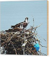 Osprey Couple Wood Print
