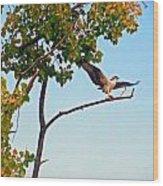 Osprey Dance Wood Print