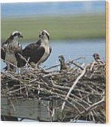 Osprey Family Wood Print