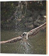 Osprey Fishing The Nequasset River Wood Print by Allen Ponziani