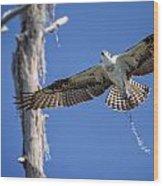 Osprey Fly By Wood Print