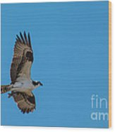 Osprey Flying Home With Dinner Wood Print by Robert Bales