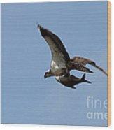 Osprey Grabs Lunch Wood Print