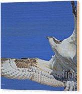 Osprey Grace And Beauty Wood Print