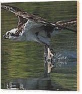 Osprey Hunter Wood Print
