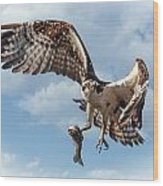 Osprey In The Clouds Wood Print