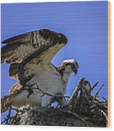 Osprey In The Nest Wood Print