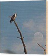 Osprey Looking Toward Full Moon Wood Print