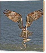 Osprey Morning Catch Wood Print
