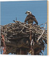 Osprey Nest Wood Print