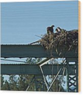 Osprey Nest With Mom And Chicks Wood Print