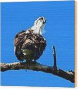 Osprey On A Branch Wood Print