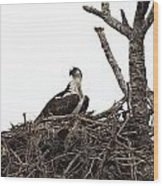 Osprey On A Nest In The Everglades Wood Print