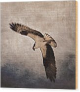 Osprey Over The Columbia River Wood Print