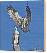 Osprey Pair Love In The Air Wood Print