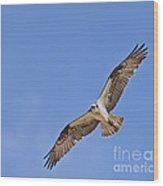 Osprey Pandion Haliaetus In Flight Wood Print