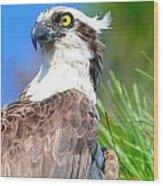 Osprey Profile Wood Print
