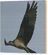 Osprey Reach  Wood Print