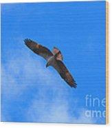 Osprey Soars Wood Print