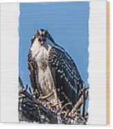 Osprey Surprise Party Card Wood Print