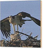 Osprey Warning Wood Print