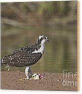 Osprey With Breakfast Wood Print