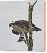 Osprey With Fish 2 Wood Print