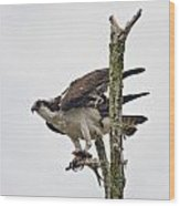 Osprey With Fish 3 Wood Print