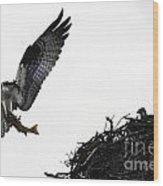 Osprey With Sushi Wood Print