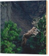 Osprey With Fish Wood Print