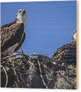 Ospreys In The Nest Wood Print