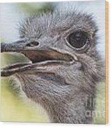 Ostrich Bokeh V2 Wood Print