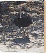 Ostrich Dance Wood Print