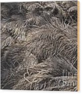 Ostrich Feathers  Wood Print