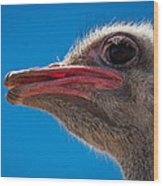 Ostrich Profile Wood Print