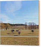 Ostriches Wood Print