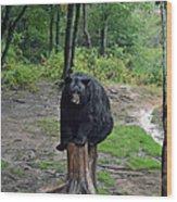 Oswald's Bear Wood Print