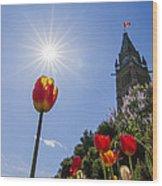 Ottawa Tulip Festival Wood Print
