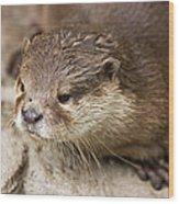 Otter Closeup Wood Print
