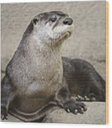 Otter North American  Wood Print