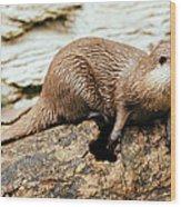 Otter On A Tree Wood Print
