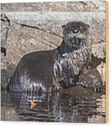 Otter Posing Wood Print