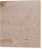 Otter Tracks In Fresh Snow Wood Print