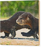 Otters Crossing The Road  Wood Print