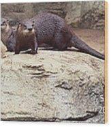 Otters Wood Print