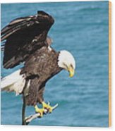 Our Finest American Bald Eagle Wood Print
