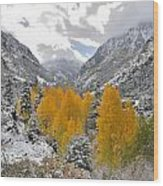 Ouray Fall Colors Wood Print