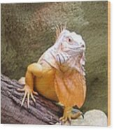 Out Of Africa Orange Lizard 1 Wood Print